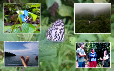 Relax amidst nature with forest walk, monsoon rains and safe beaches.